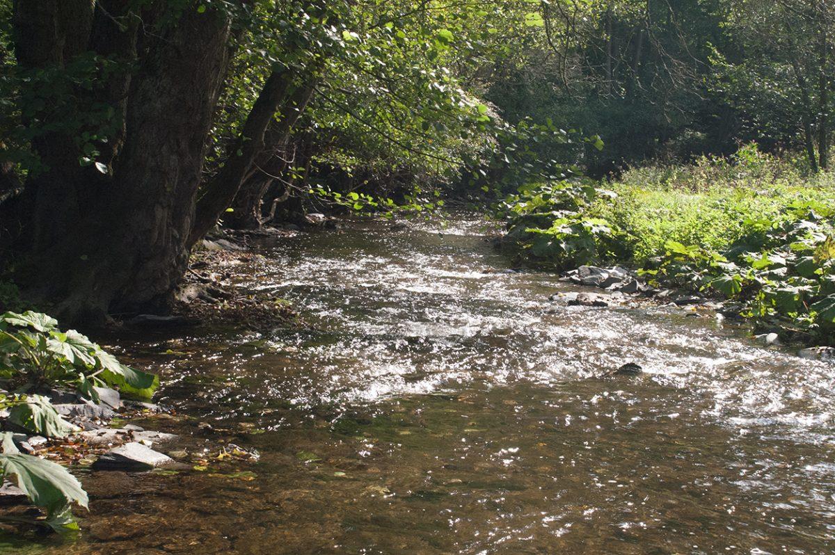 Der Hunsrück: Grüne Wälder, stille Bächer und eine lange Geschichte