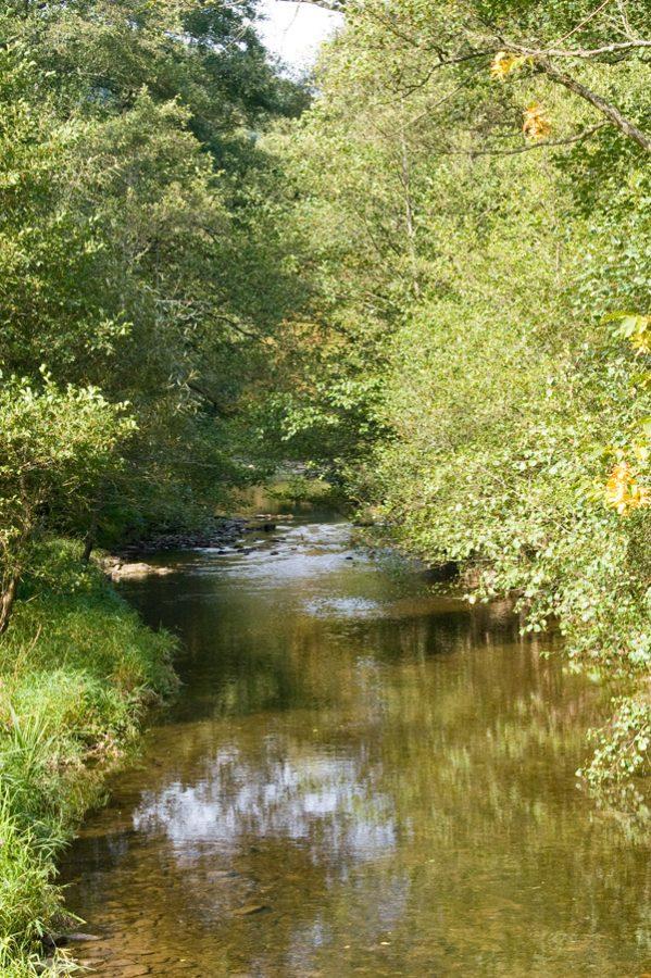 Wasser, Hahnenbach, Traumschleife Hahnenbachtal, Ufer, Büsche, Grün, Wasser