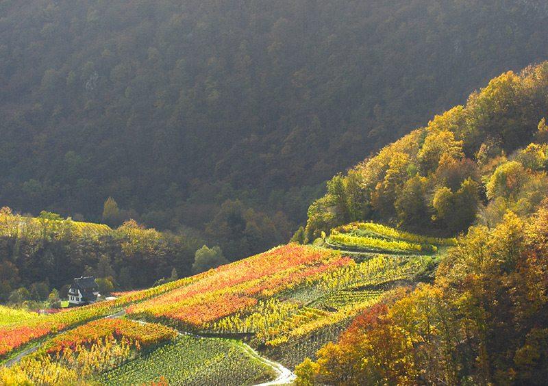 Hier steht ein Bild mit dem Titel: Nur für einen kurzen Moment taucht die Sonne die Weinberge in goldenes Licht (Foto: H.-J. Schneider)
