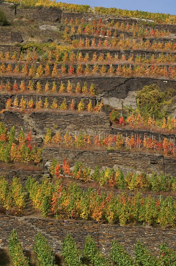 Hier steht ein Bild mit dem Titel: Herbst in den Weinbergen bei Walporzheim