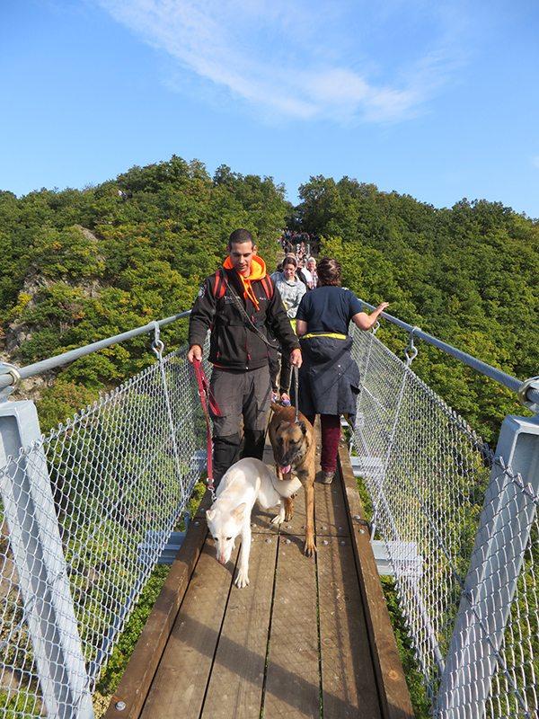 Hier steht ein Bild mit dem Titel: Wäre mir persönlich zu stressig: Gleich mit zwei Hunden an der Leine über die Brücke (Foto: Hans-Joachim Schneider)