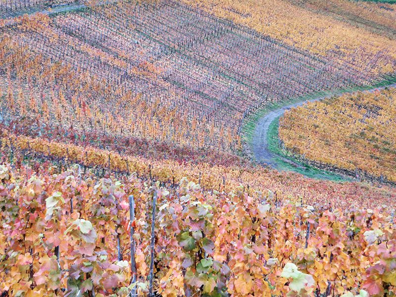 Hier steht ein Foto mit dem Titel: Farbenpracht beim Wandern auf den AhrSteig unterhalb der Saffenburg – wenn auch schon ein wenig stumpf geworden (Foto: Hans-Joachim Schneider)