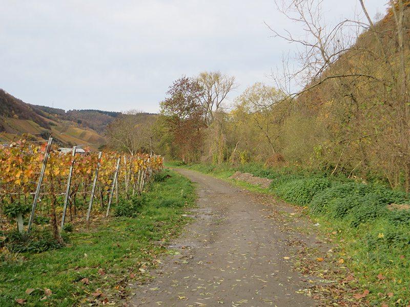 Weg, Wingert, Flussufer, Herbsfarben: Ein dickes Minus gibt es von mir für diese Wegpassage (Foto: Hans-Joachim Schneider)