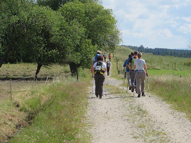 Hier steht ein Foto mit dem Titel: Immer wieder vor mir: das Quartett mit den Nordic Walking Sticks (Foto: Hans-Joachim Schneider)