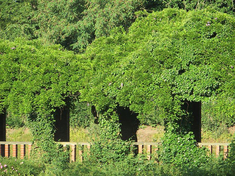 Hier steht ein Bild mit dem Titel: Grüne Höhlen, versteckte Arkaden, faszinierend grüner Friedenspark (Foto: Hans-Joachim Schneider)