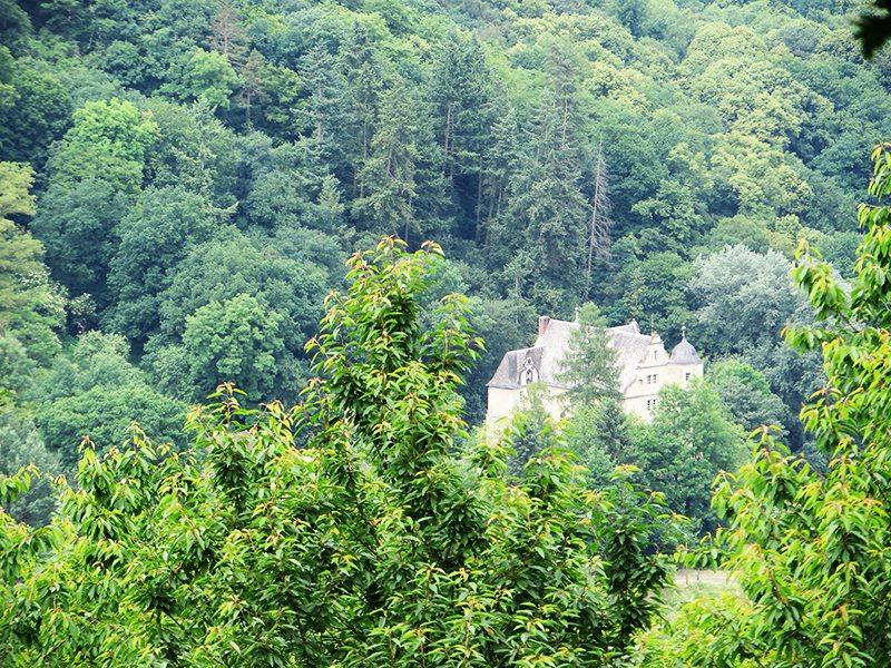 Hier steht ein Bild mit dem Titel: Fast nur die Dächer und Türmchen sind zu sehen von Schloss Schneppenburg (Foto: Hans-Joachim Schneider)