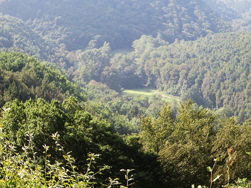 Hier steht ein Bild mit dem Titel: Weites grünes Baybachtal, hier kann das Auge ruhen und die Seele Frieden finden (Foto: Hans-Joachim Schneider)