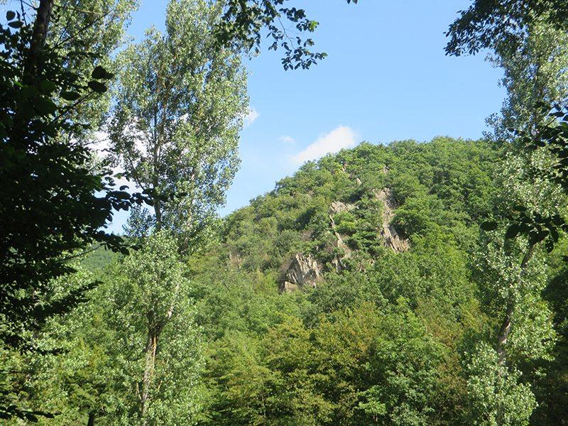 Hier steht ein Bild mit dem Titel: Von diesem ganz besonderen Platz im Wald blickt der Jäger Hampit auf das Murscher Eselsche (Foto: Hans-Joachim Schneider)