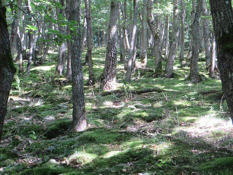 Hier steht ein Bild mit dem Titel: Und immer wieder der zauberhafte Eichenwald (Foto: Hans-Joachim Schneider)