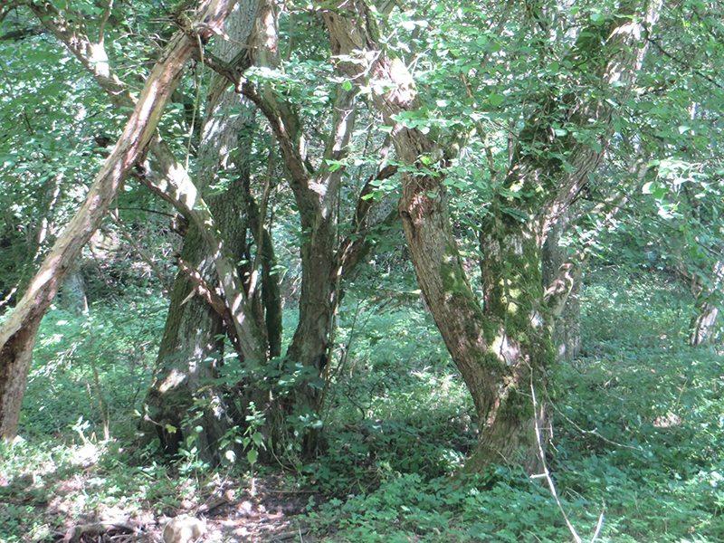 Hier steht ein Bild mit dem Titel: Bis auf ein kurzes Stück im Tal verläuft die Traumschleife Murscher Eselsche fast ausschließlich im Wald (Foto: Hans-Joachim Schneider)