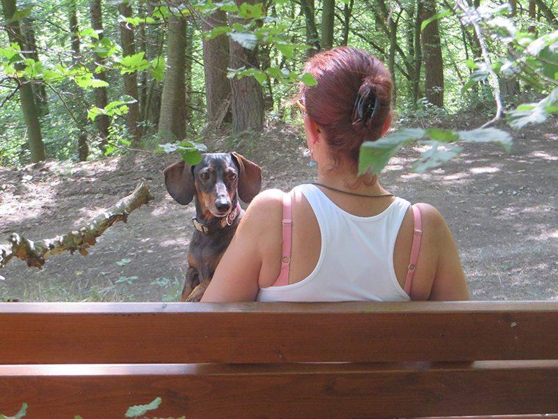 Hier steht ein Foto mit dem Titel: Abenteuer Steinerberg: Verschnaufpause für Frau und Hund beim strammen Anstieg zum Steinerberg (Foto: Hans-Joachim Schneider)