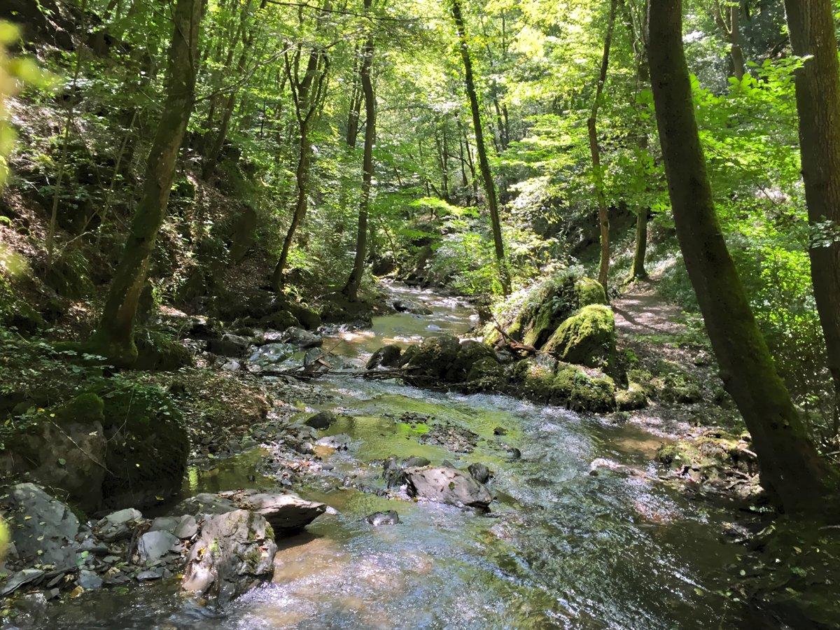 Ein schmaler Bach in einem grünen Tal von Wald umstanden: Das ist der Ehrbach in der Ehrbachklamm