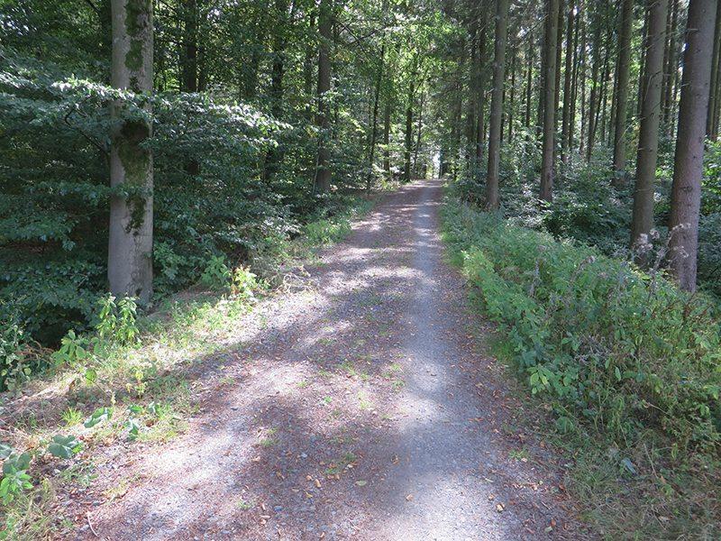 Hier steht ein Bild mit dem Titel: Der typische Naherholungswald auf den Höhen rund um Kaisersesch (Foto: Hans-Joachim Schneider)