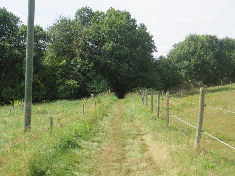 Hier steht ein Bild mit dem Titel: Bei Breitenbruch führt der Zuweg in den Wald (Foto: Hans-Joachim Schneider)