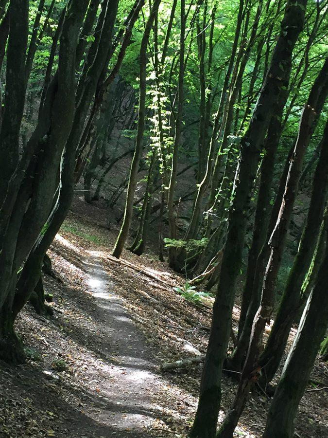 Hier steht ein Bild mit dem Titel: Der verzauberte Wald bei der kleinen Kapelle (Foto: Hans-Joachim Schneider)