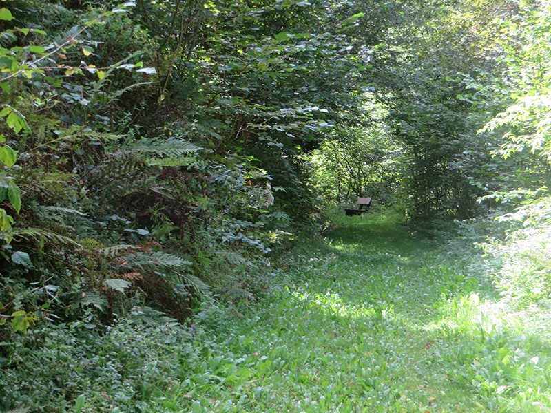 Hier steht ein Bild mit dem Titel: Grünes Paradies (Foto: Hans-Joachim Schneider)