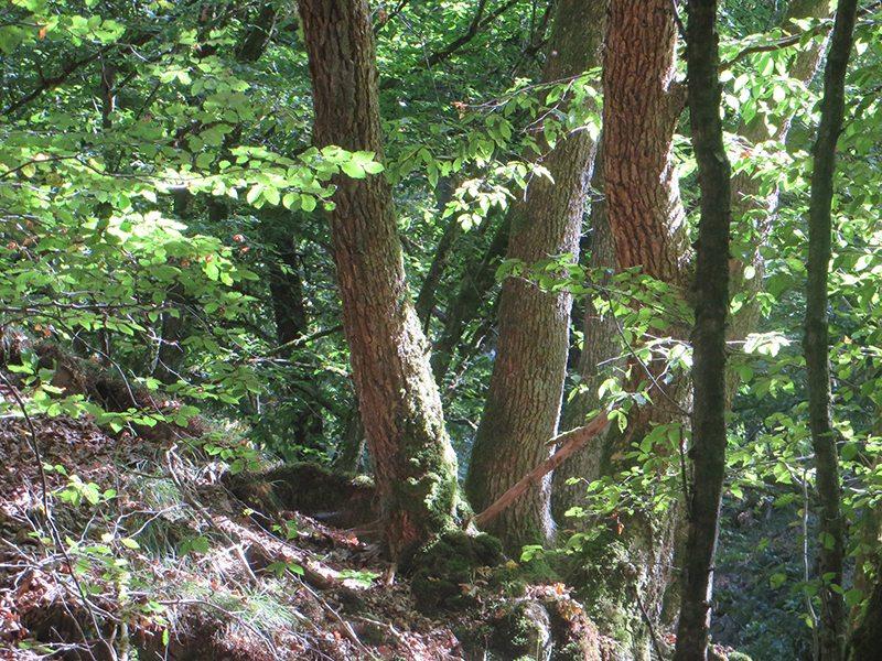 Hier steht ein Bild mit dem Titel: Licht und Schatten, dies gerade im Sommer im Wald so faszinierende Spiel nimmt mich auch hier gefangen (Foto: Hans-Joachim Schneider)
