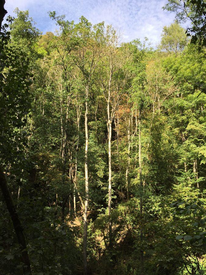 Hier steht ein Bild mit dem Titel: Nach oben, nach oben: Die Bäume scheinen keine andere Richtung zu kennen (Foto: Hans-Joachim Schneider)