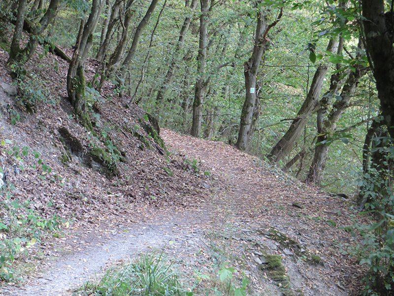 Hier steht ein Bild mit dem Titel: Statt neben der Landstraße herzulaufen, biege ich lieber noch einmal in den Wald ab (Foto: Hans-Joachim Schneider)
