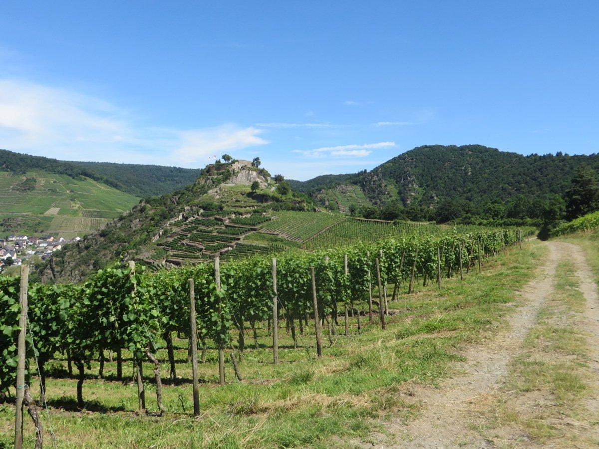 Ein Weg, ein Weinberg, dahinter die Ruine der Saffenburg unter strahlend blauem Himmel