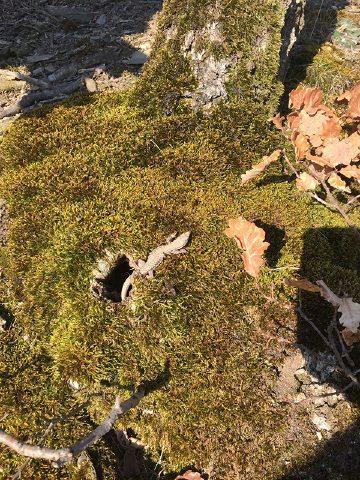 Hier steht ein Bild mit dem Titel: Genießt noch die letzten Sonnenstrahlen des Herbstes – eine Eidechse (Foto: Hans-Joachim Schneider)
