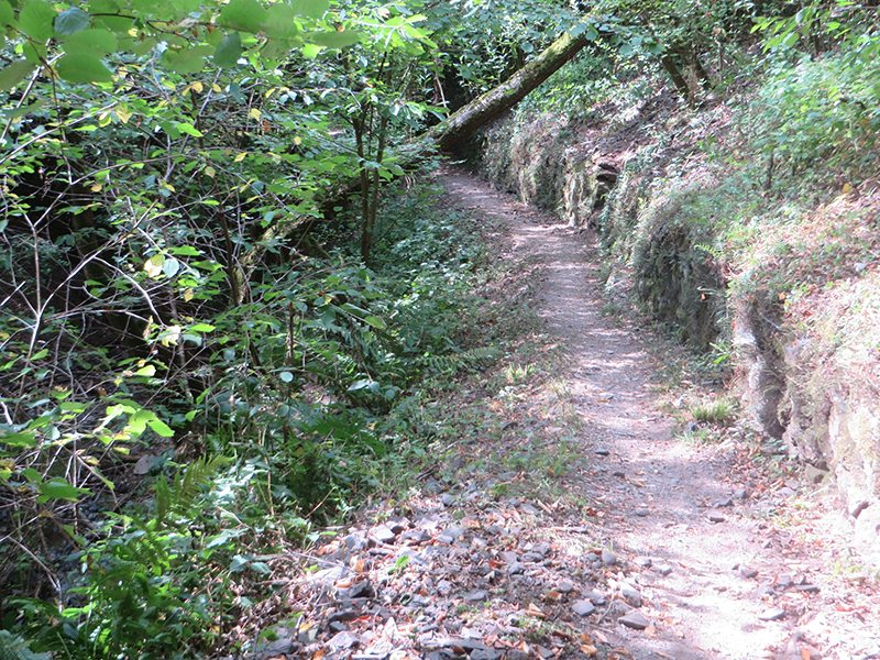 Weg, Moselsteig, Weinbergmauern, schmaler Weg, steil