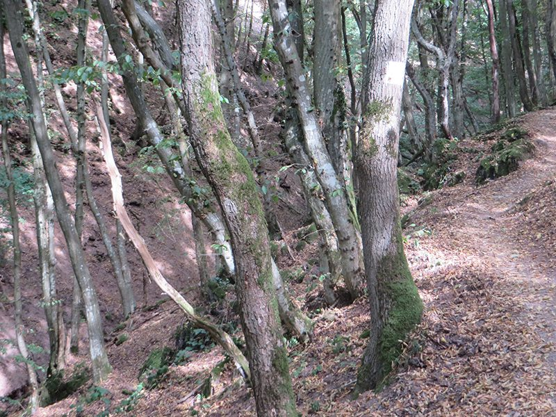 Wald, Eichen, Buchen, Licht, Schatten, Pfad, Moselsteig