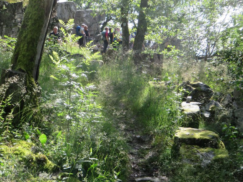 Felsen, Natur, Bäume, Büsche, Grün, Teilnehmer Wandermarathon,