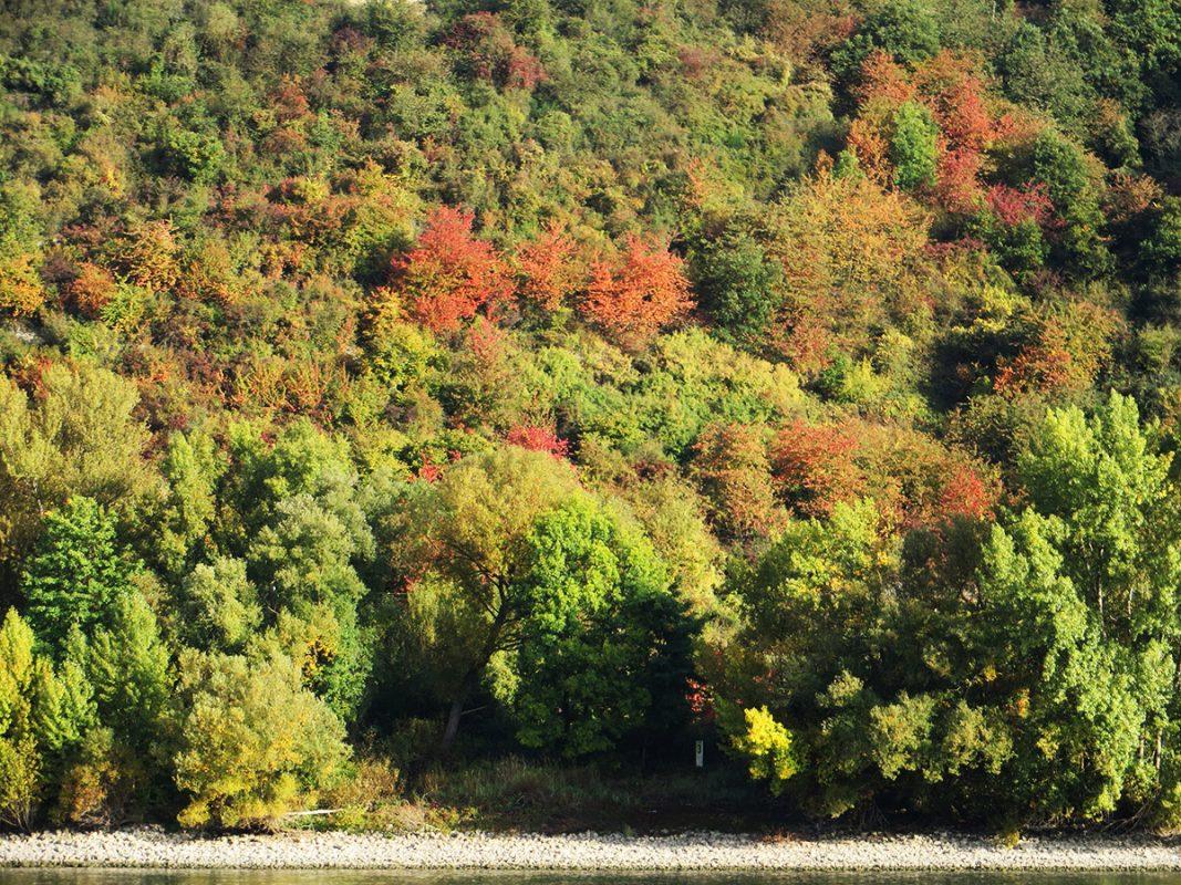 Bunter Herbstlaub verzaubert das gegenüberliegende Ufer in eine rauschende Farbpallette