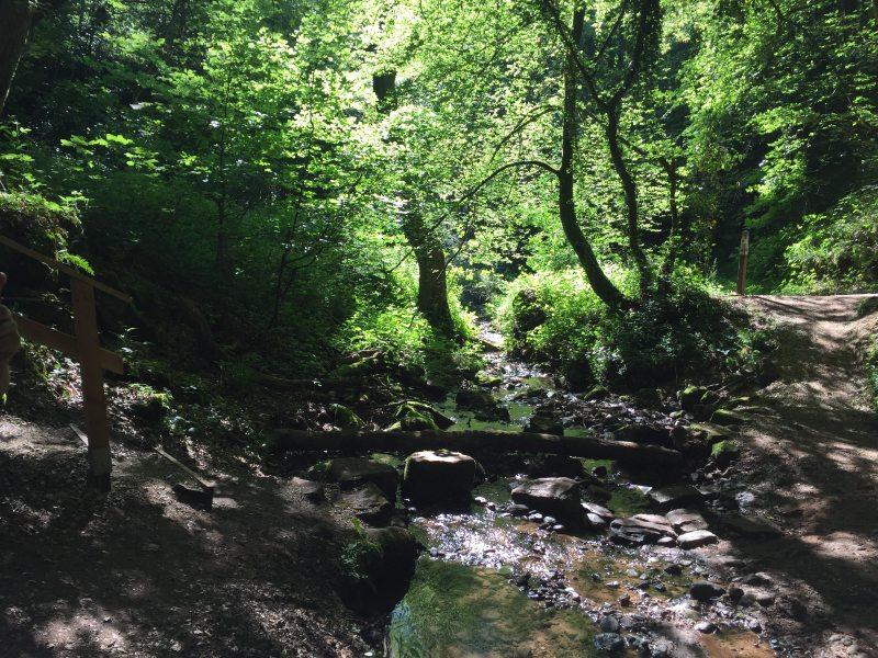 Butzerbach, Römerpfad, Taleinschnitt, Wald, Schatten