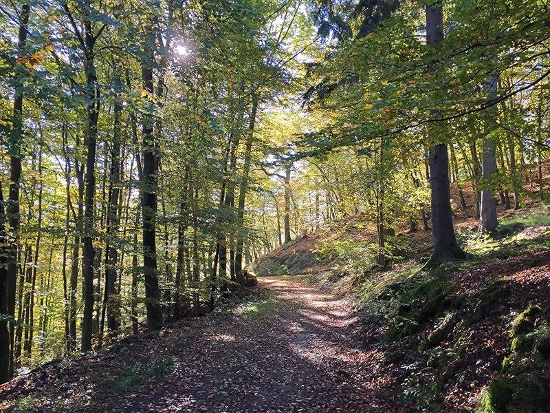 Herbst, Wald, bunt, licht, Sonne, Lichtreflexe, AhrSteig blau