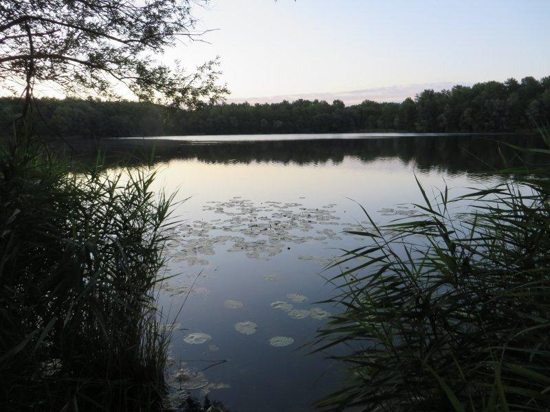 Wasser, Dunkelheit, Wald, Sonnenaufgang, Schatten
