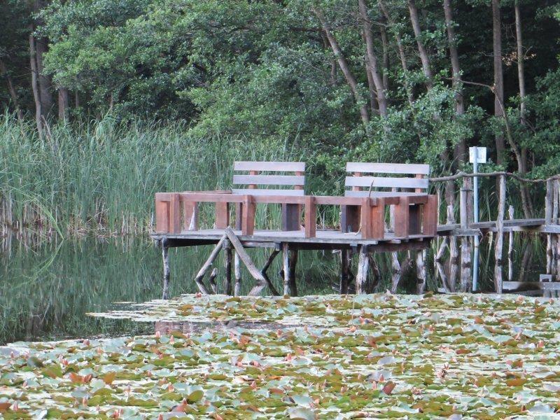 See, Schilf, Brühler Seenplatte, Stege, Angelstege