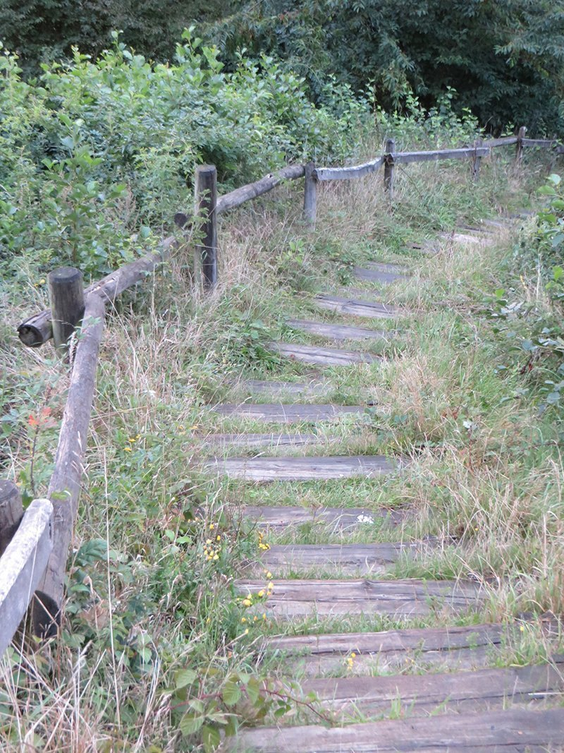 Treppen, Natur, Holz, Anstieg, Glessener Höhe