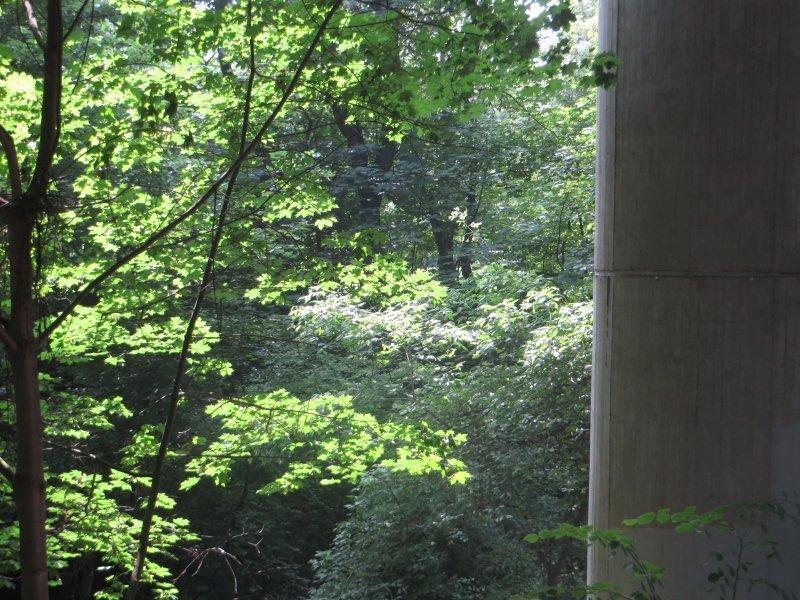 Baum, Wald, Rheinburgenweg