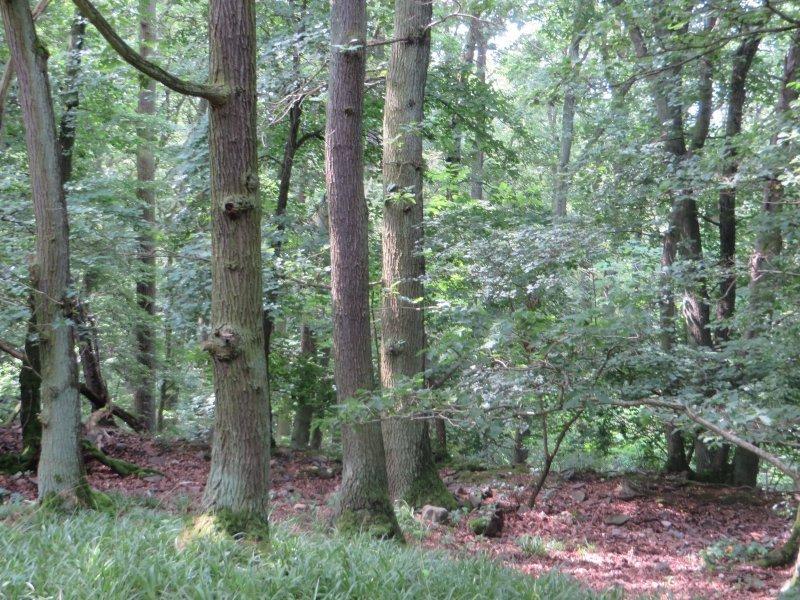 Wald, Grün, Pfad, Rheinburgenweg, frisch, Schatten, kühl