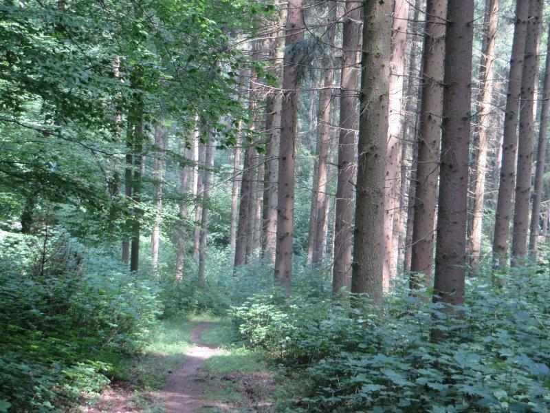 Wald, Sonne, Licht, Lichtspiele auf dem Rheinburgenweg