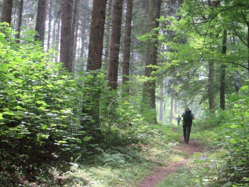 Wald, Wanderer, Buchenwald, Weg, Pfad, Lichtspiele, Rheinburgenweg