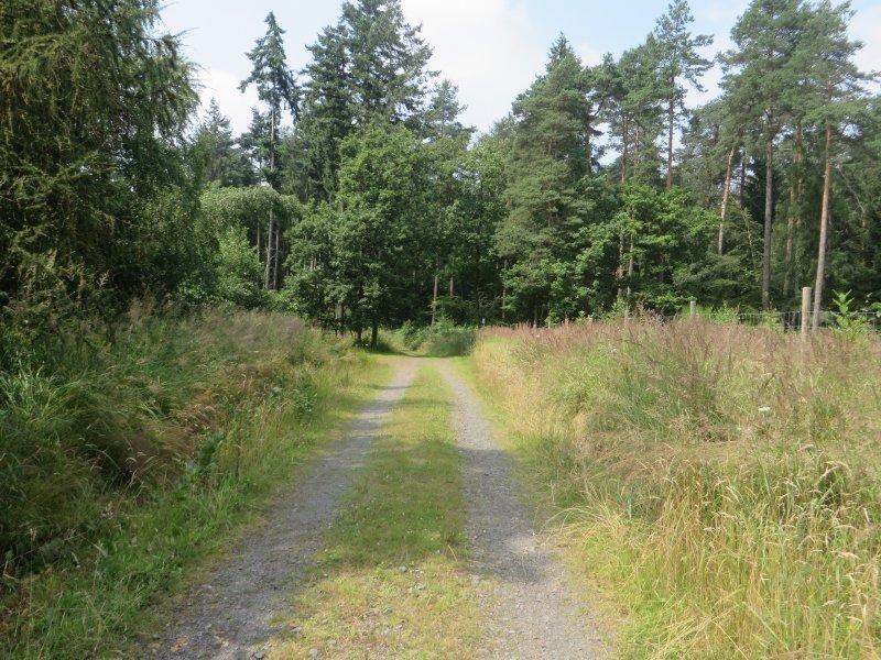 Weg, Waldweg, Fahrspur, Wald, Rheinburgenweg