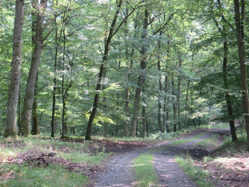 Weg, Pfad, junger Wald