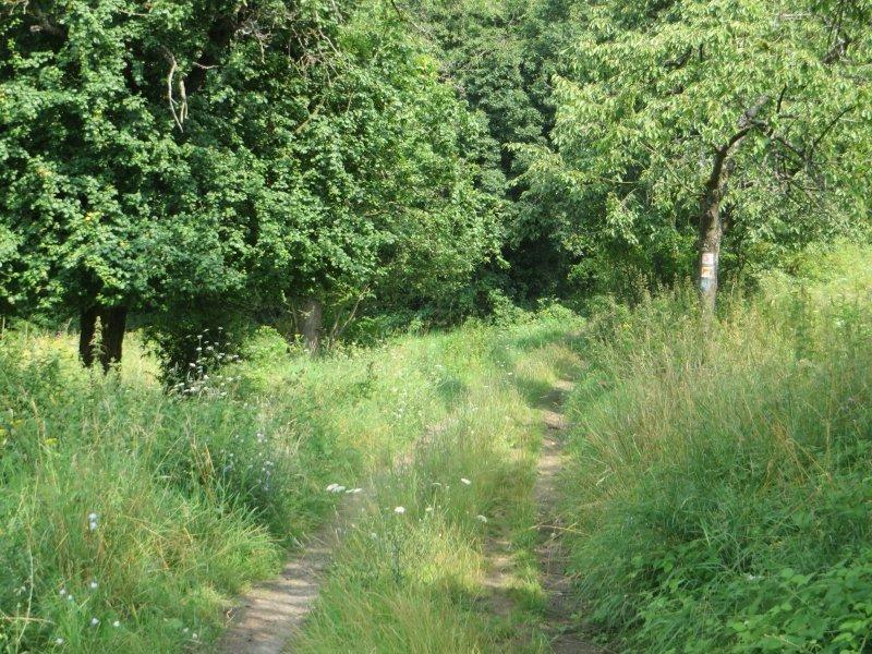 Gras, Weg, Wiese, üppiges Gras, Wald, Waldrand, Rheinburgenweg