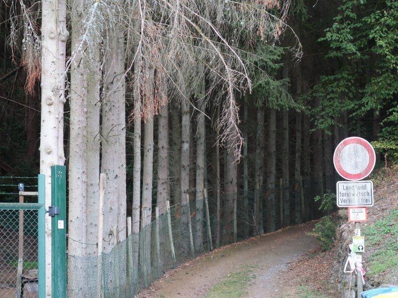 Fichten, Weg, Reihe, aufgereiht, Stoppschild, Wald