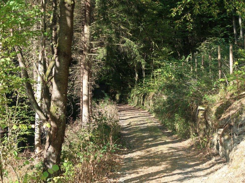 Wald, Anstieg, Weg, Sonne, Ahrtal