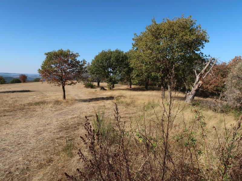 Gras, Bäume, Steinerberg, HImmel, blau, Ahrtal