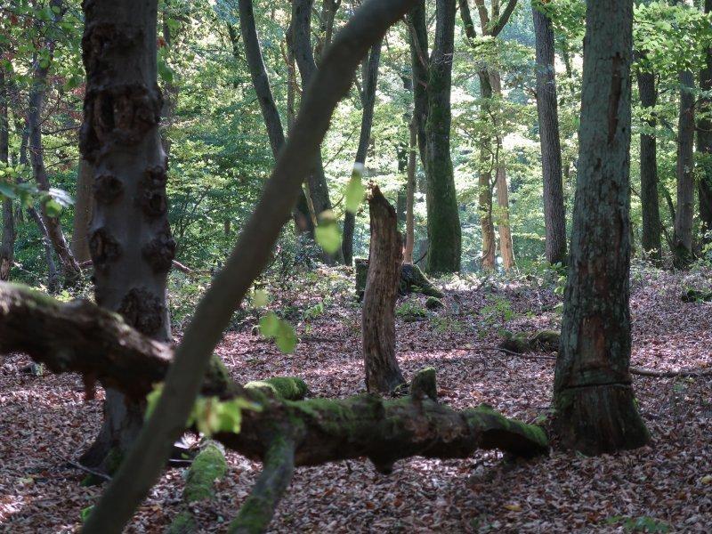Wald, Bäume, grün, Laub, welk, Ahrtal