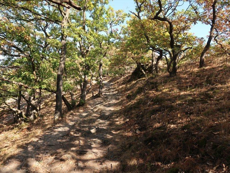 Ahrtal, Bäume, Eichen, Weg, Steine, Felsen, Sonne, ausgebrannt.