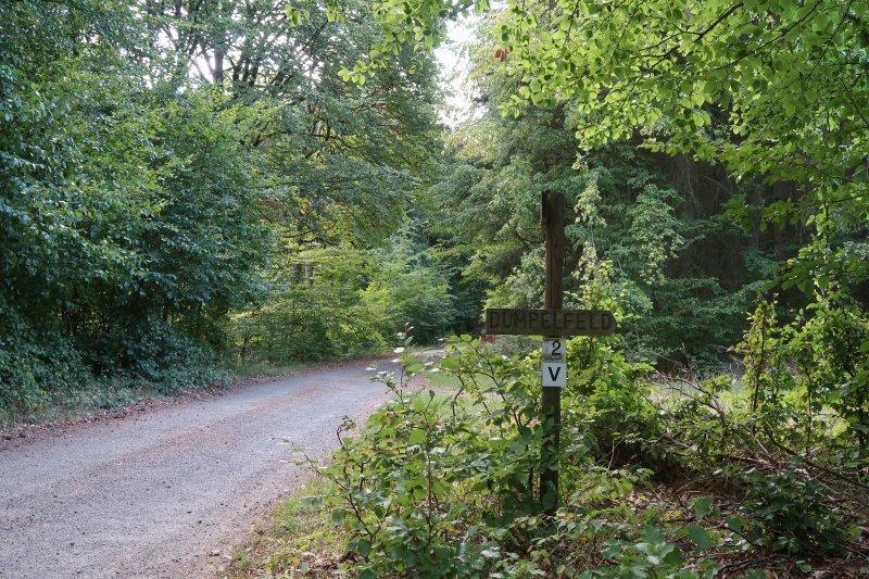 Dem Eifelverein sein Weg, irgendwann verlasse ich ihn nach rechts, Richtung Dümpelfeld (Foto: Hans-Joachim Schneider)