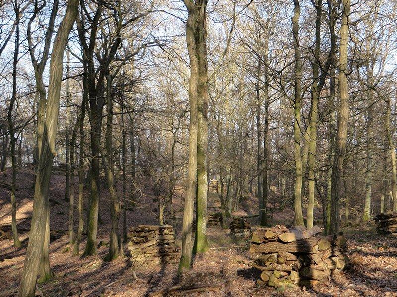 Sonniger Buchenwald, noch unbelaubt, begebnet mir beim Wandern auf den Steinerberg