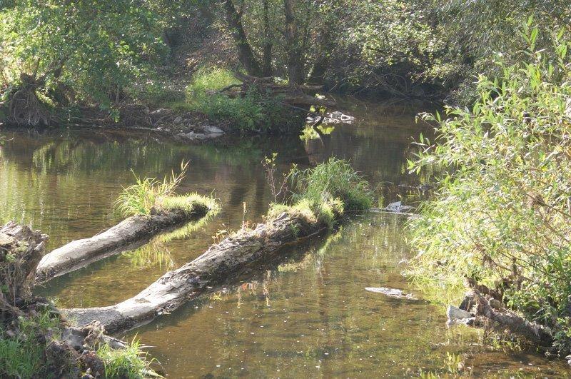 Ein Bach, alte Baumstämme und Grasbulten, das Wasser reflektiert das Sonnenlicht.